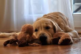 Image result for calm dog